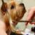 Precious Paws Pet Grooming