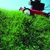 B-Green Lawn Service