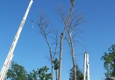 Quinlan Tree Service - Milford, MI. Tree Pruning and Removal