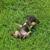 W KY Animal Rescue