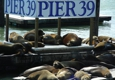 Pier 39 - San Francisco, CA