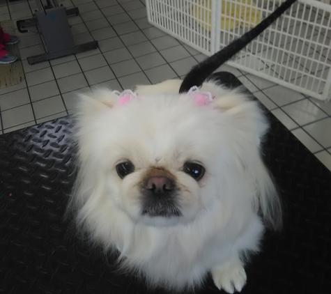 Flutie's Doggie Hideout - New Port Richey, FL