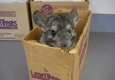 Animal Care Center - Springfield, MO. Playing hide and seek in this box is fun!