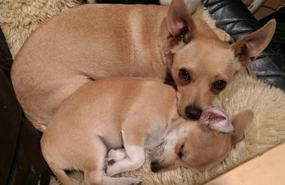 Maricopa County Animal Shelter - Phoenix, AZ