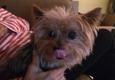 Bubbles Pet Grooming - Miami, FL. I love her -- MADDOX