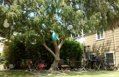 The Urban Lumberjack - Los Angeles, CA. Chinese elm pruned