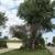 Greenwood Tree Service