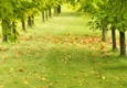 Greentrees - Rochester, MI
