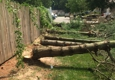 Above & Beyond Tree and Shrubbery Service - South Bend, IN. White pine pic # June 2017