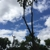 Action Tree Service LLC