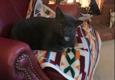 Backdoor Friends Cat Care - Farmington Hills, MI