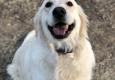 Mountain Run Kennel - Culpeper, VA. Winnie loves Mountain Run kennel!