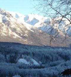 Carlos Tree Service Inc - Anchorage, AK