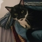 Harper Woods Veterinary Hospital - Harper Woods, MI. Figaro now, snuggling under the covers