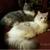 RagaMuffin Cat World