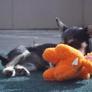 Dog Dayz Of California - Oceanside, CA