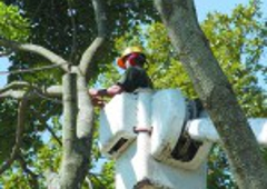 Forrest Tree Service