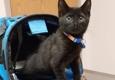 Compassion Veterinary Health Center - Poughkeepsie, NY