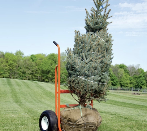 Adolfo Tree Service - Houston, TX. Tree planting and tree transportation or transferring in Houston Texas top rated local service