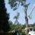Stallion Tree Professionals of CSRA, Inc.