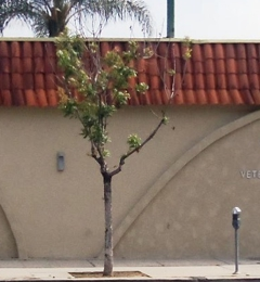 Veterinary Medical Center Studio City - Studio City, CA