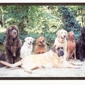 Dog Days - Woodside, CA