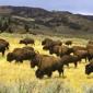 Best Western - West Yellowstone, MT