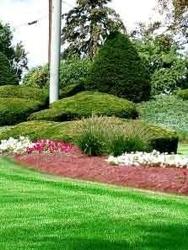 Scheetz Tree Service and Landscaping
