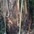 Liberty Arbor Landscpg & Tree
