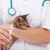 Rahway Animal Hospital