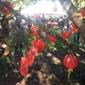 Planting Fields Arboretum - Oyster Bay, NY