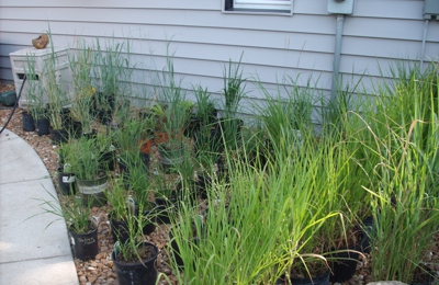 Gardening Adventures-From the Ground Up Nursery 161 Paoli St