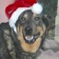 Maricopa County Animal Shelter - Phoenix, AZ. REST IN PEACE MAX