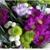 Aegis Cremation & Funeral Services