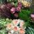 Plant Bazaar Florist