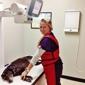 TLC Animal Hospital - Houston, TX