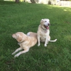 Bark Run Play-The Happy Pet Place