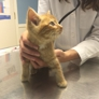 Mooresville Animal Hospital - Mooresville, NC