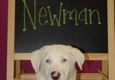 Dog Day, Every Day! - Cincinnati, OH
