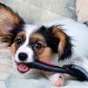 Fursace Pet Designers