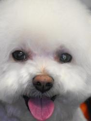 Lucky Dog Grooming Salon