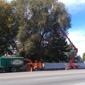Nye's Tree Service & Stump Removal