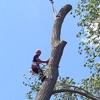 Aspen Tree Expert Company