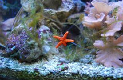 The Downtown Aquarium - Houston, TX