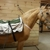 Cytowave Equine Therapy