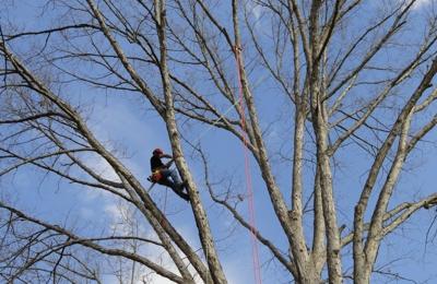 Top Notch Tree - Asheville, NC