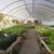 Reminiscent Herb Farm Nursery & Landscapg Inc