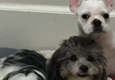 Furry Tails Dog Grooming - Houston, TX