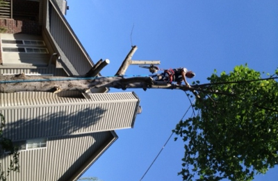 Branch Busters Tree Service - Hermitage, TN