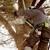 Homeland Tree Service